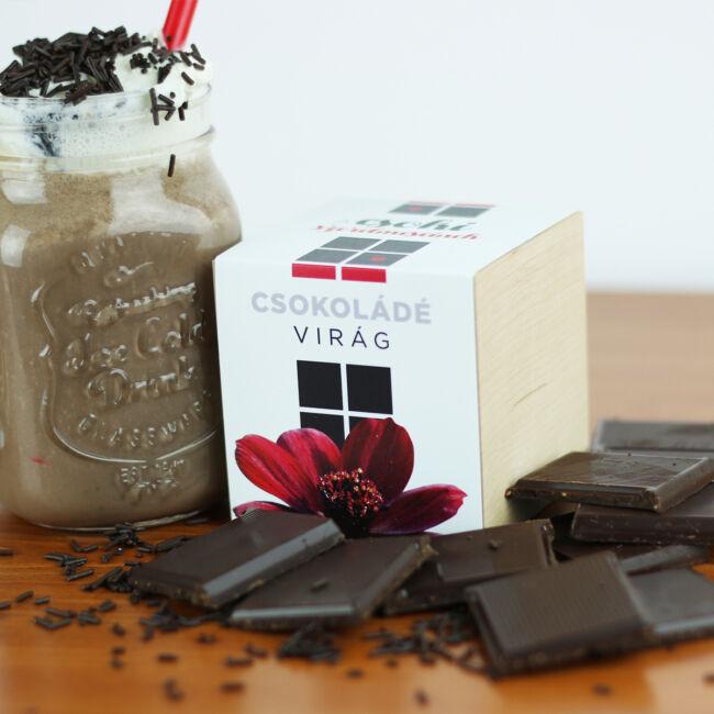 Csokoládé illatú virág - A csoki szerelmeseinek