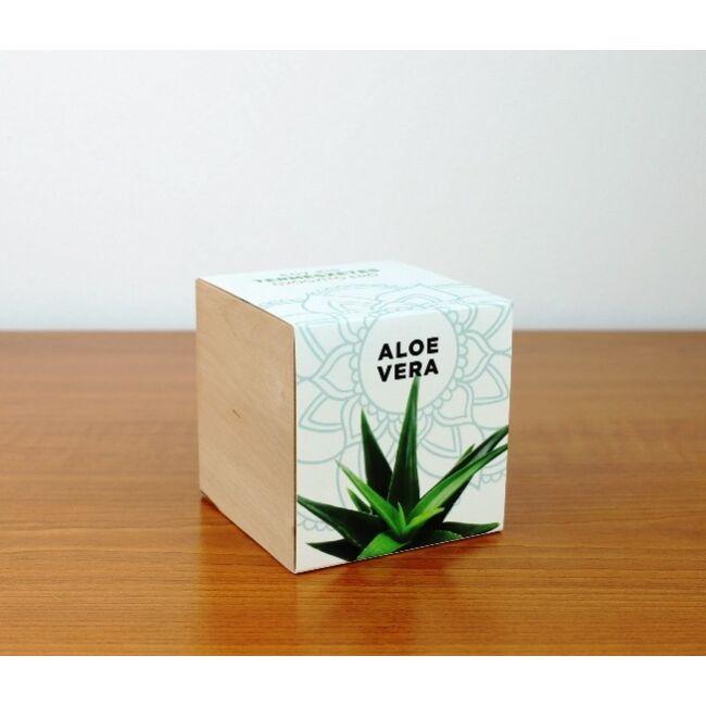 Aloe Vera - Egy kis természetes gyógyítóerő