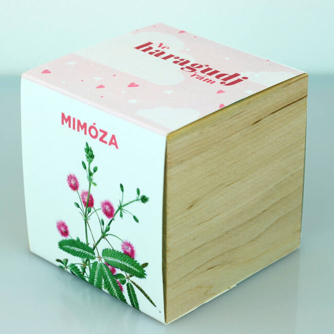 Mimóza - Ne haragudj rám