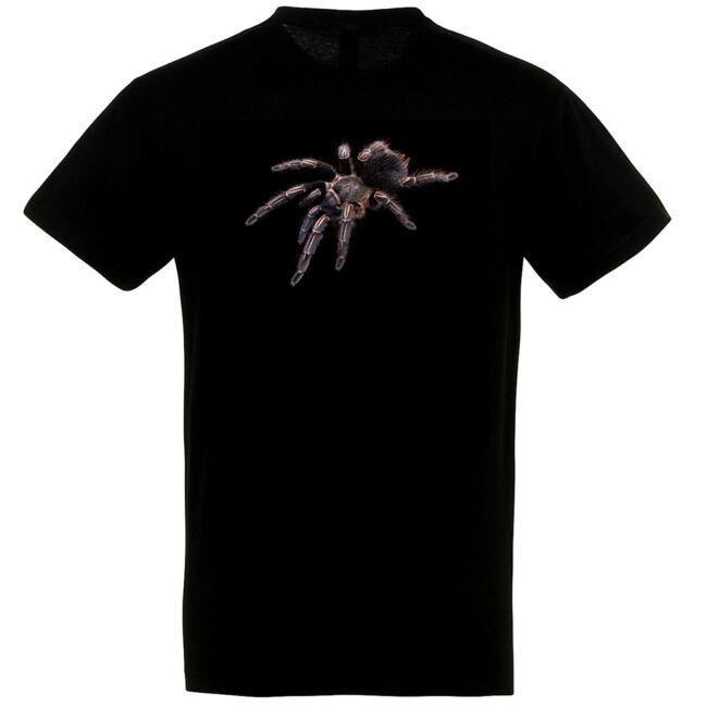 Aphonopelma seemanni, madárpókos póló, fekete színben