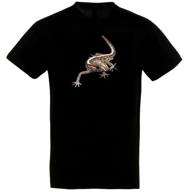 Paroedura picta, nagyfejű gekkó