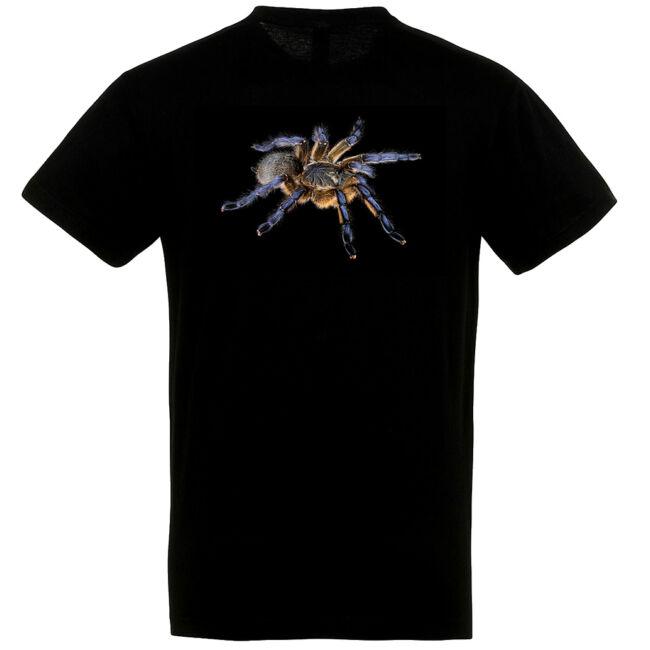 Harpactira pulchripes, madárpókos póló, fekete színben